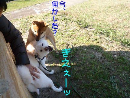 kww9柴1ラブ③ ぎぇぇぇぇー