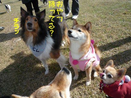 OW@恋の浦ラン じんくんのカメラ目線!
