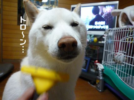 秘密結社・カッパ犬 ふぁみとろ①