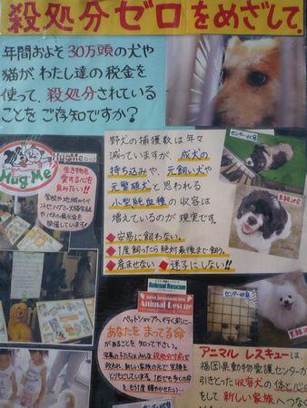20101212メイトム ぱねる3
