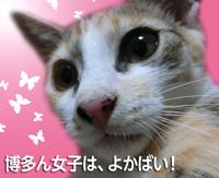 komugi_banner.jpg