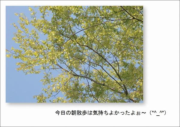 2010050101.jpg