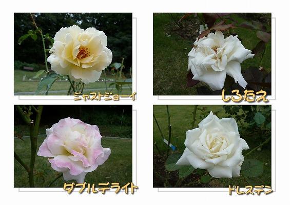 20100926124.jpg