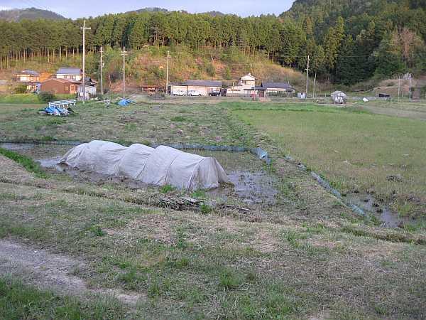 かぼちゃ畑のくさとり