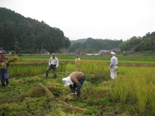 20101020inekari1.jpg