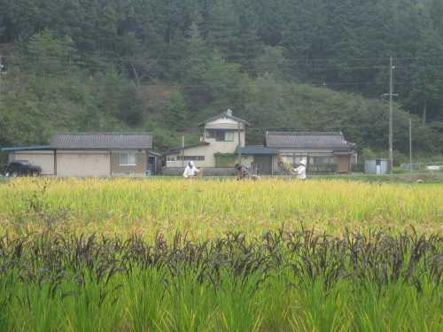 20101020inekari3.jpg