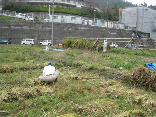 20101020inekari8.jpg