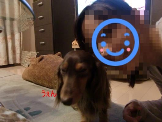 CIMG5664.jpg