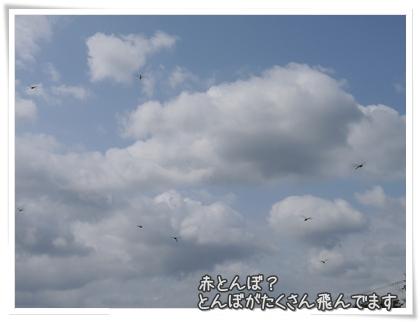 004-20110811.jpg