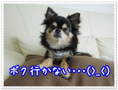 DSCN4278.jpg