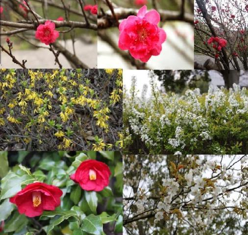 鮮やかな色の梅