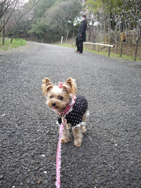 今日はパパも一緒のお散歩なの♪