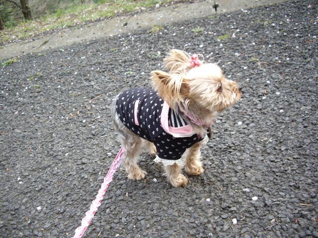 風がある日はお散歩は大変です