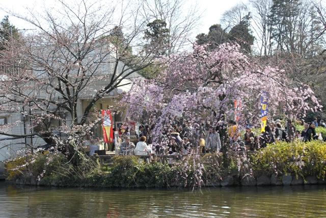 枝垂桜も咲いてました