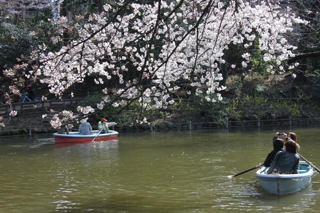 ボートを漕ぎながらのお花見も素敵ね
