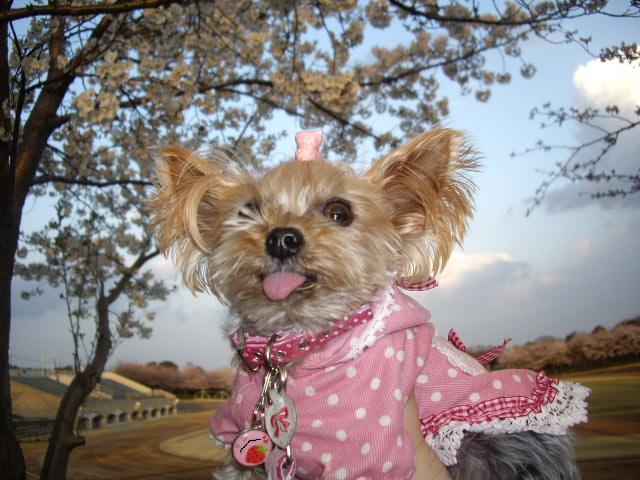 コピー ~ 桜をバックにお写真