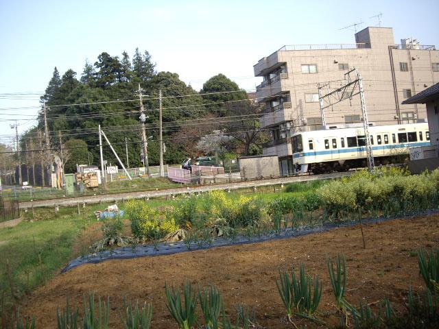 小田急沿線なので電車も見れるよ