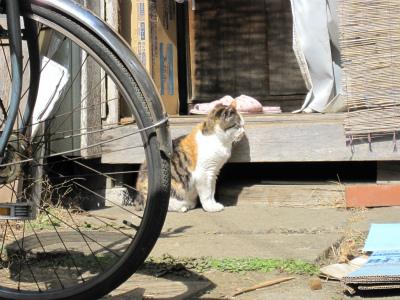 めがわるい猫2