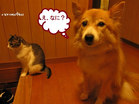 001_20111024205703.jpg
