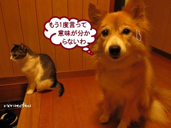 002_20111024205703.jpg