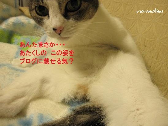 003_20111121114500.jpg