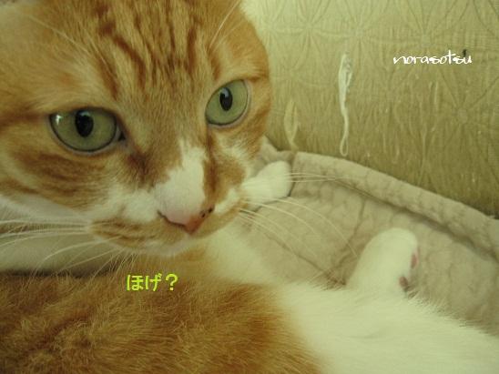 009_20111026085712.jpg