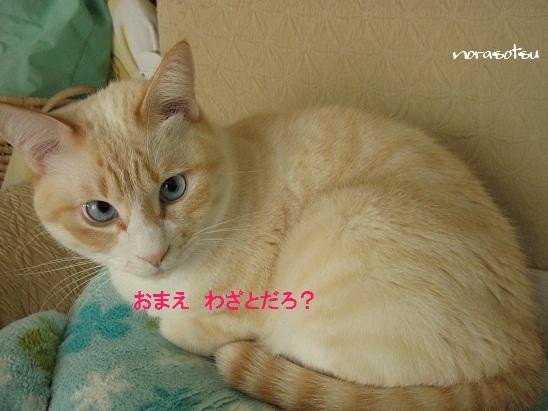 015_20111026085741.jpg