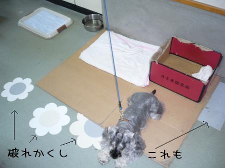20100729-3.jpg