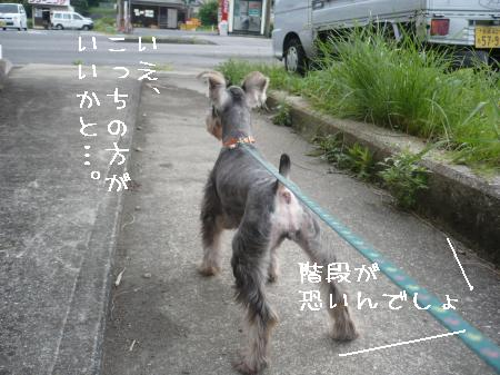 20100827-5.jpg