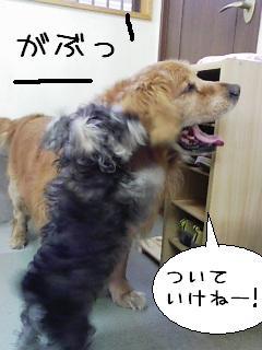 wanko12.jpg