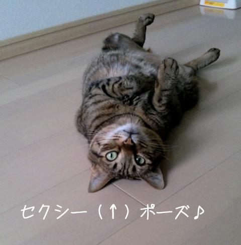 猫の仰向け寝姿