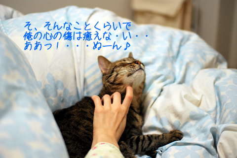 猫の喉をなでれば、すぐゴロゴロ♪