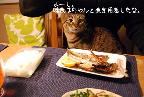 魚に喰らい付く猫