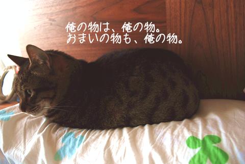 ツチノコ猫