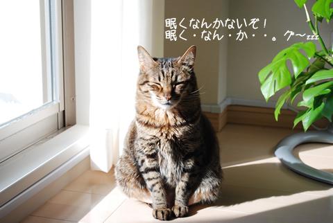 日向ぼっこするネコ