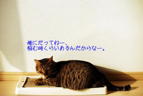 やさぐれる猫