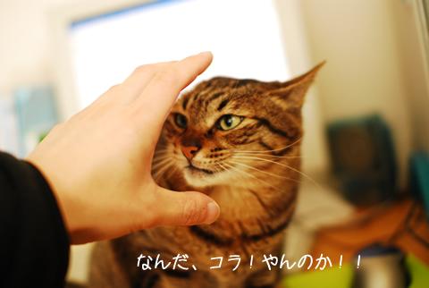 歌舞伎役者の化粧みたいな顔の猫