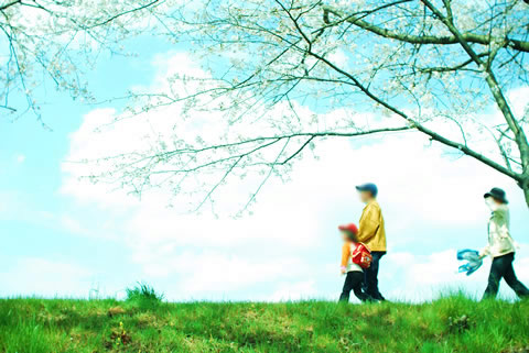 桜の花道を散歩