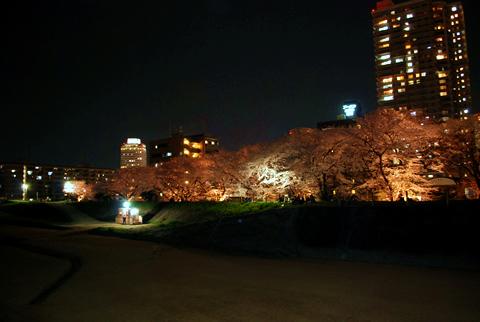 草津の堤防沿いの桜のライトアップ