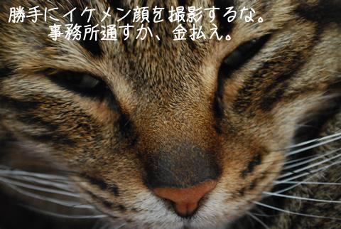キジトラ猫の顔
