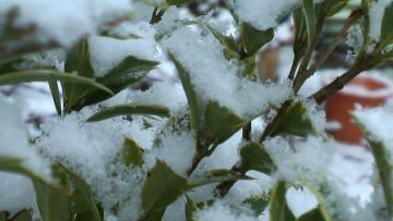 キラキラ雪