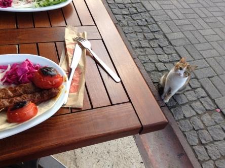人間用の食べ物は猫の体に悪いのであげません