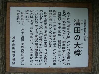 清田の大樟