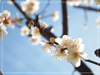 春やねぇ~