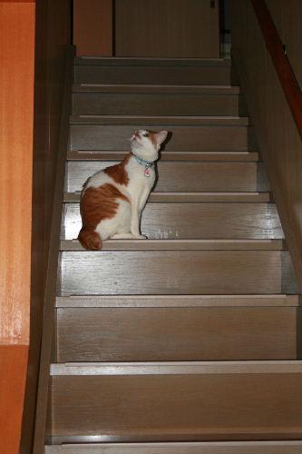 階段のれお2