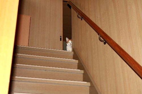 階段のれお