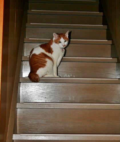 階段のれお4
