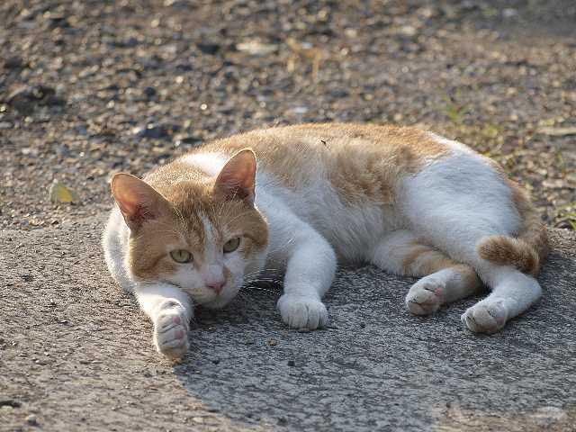 猫写真:ばきゅーん!