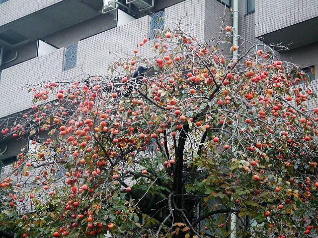 カラスに収穫される秋