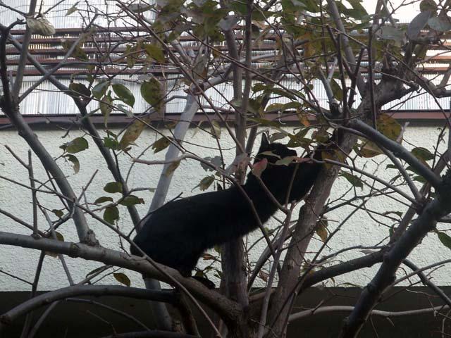 木登りしていた黒子にゃ~